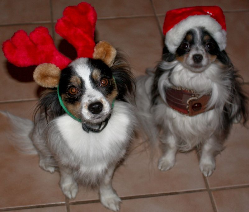 Beas Claus & Slammy Deer
