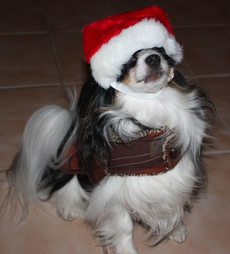 Beas Claus